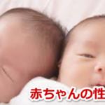 赤ちゃん 性別