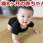 生後8ヶ月の赤ちゃん